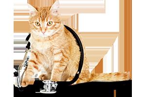 Специалност Ветеринарен техник