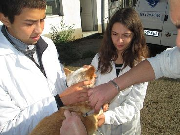 Ветеринарен техник 3